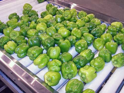 Roller Inspection Conveyor with Green Peppers