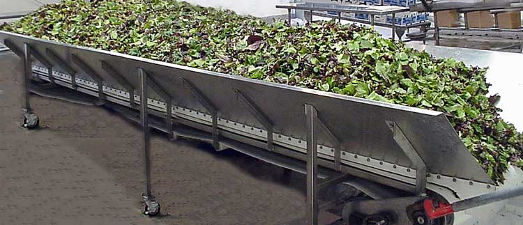 Conveyor Spinach